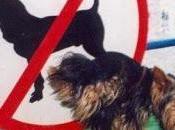 Divieto accesso cani nelle aree verdi sono illegali