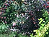 #fioridivenerdì tavolo flessuose composizioni physocarpus opulifolius 'Diabolo'
