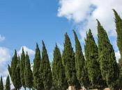 Isola d'Elba senza glutine camper