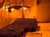 GAMBOLO' (pv). Coltiva piante marijuana casa: arrestato produzione sostanze stupefacenti