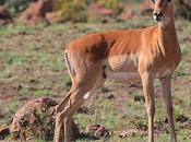 Safari Africa Parco Nazionale Pilanesberg: foto viaggio