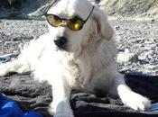 Spiagge cani Seconda parte