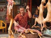 Carrefour vende carne cane Cina