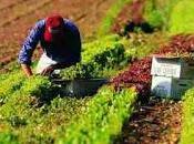Agricoltura italiana ginocchio, siccità provoca danni milionari