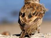 peso uccellino: pisapia