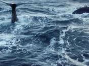 Balena Plastica, straordinaria storia documentario TG24