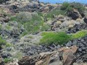 Pantelleria, isola estrema rocce, venti mare