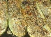 Zucchine ripiene sesamo mentuccia