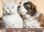 viaggio nostri amici animali