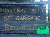 Super avanzo Parco Nazionale Gargano: milioni euro spesi 2016 gestione Pecorella