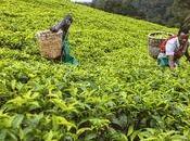 crescita l'esportazione Rwanda