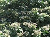piante poco comune giardini pubblici della Sardegna