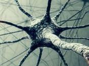 Ricercatori Scoprono neurone della coscienza