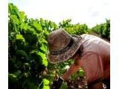 Siccità, Regione Sicilia invita imprese agricole segnalare danni