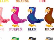 Schede didattiche colori