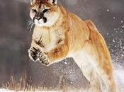 L'estinzione mammiferi
