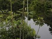 Ultimo giorno Amazzonia: delle Amazzoni respiro della foresta Diario viaggio Amazzonia