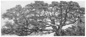 giornata internazionale dell'albero