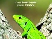 Ramarro verde Michele Riva (Dissensi edizioni)