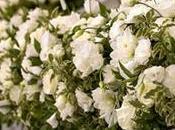 Floral Design, fiori perfetti vostro Matrimonio