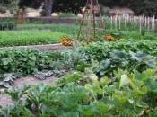 rotazione delle colture