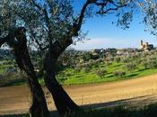 Emilia Romagna: Coriano inaugurati cantina, punto vendita sala degustazione enoturisti italiani stranieri
