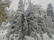 Quando nevica sulla foglia l'ha leva voglia.