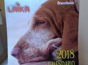 Pronto calendario 2018 dell'associazione L'Isolachenonc'è...12 mesi coccole tenerezza