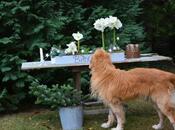 #fioridivenerdì- bulbo amaryllis hippeastrum?