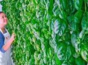 Indoor farming: Nasce Plenty!