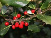 Regali Natale 2017 fotografi nostri suggerimenti
