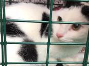 Serial killer gatti Roma, storia dalle tinte sempre fosche