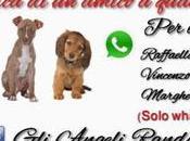 #aiutiamoadaiutare Servono coperte, pappe medicinali angeli randagi Vesuvio
