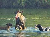 Siamo sicuri voler condividere nostra vita predatore? cani loro istinti.