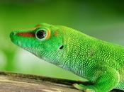 Cos'è GeckoLinux.