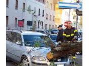 """Crollo alberature l'Associazione Bambini Flaminio"""" presenta esposto Comune Roma denunciare grave situazione pericolo dell'area."""
