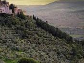 nuove aree iscritte registro nazionale paesaggi rurali storici l'olivo trait d'union molti questi differenti paesaggi.