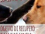 """progetto recupero cani canile Roma """"Come Amelie"""""""