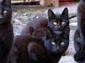 gatti narcotizzati