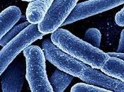 Come sviluppa nell'intestino resistenza batteria agli antibiotici