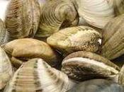 Vongole vive contaminate salmonella enterica dalla Francia