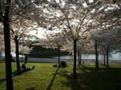 Ponti primavera Danimarca: ecco dove andare