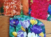 "Hyacinthus orientalis ""Jan Bos"" ""Gipsy Queen"""