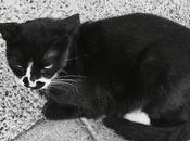 diary-changyichen: :)路上 from Japan Europe, cats are...