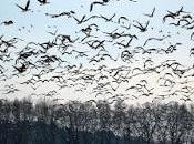 Precipitano cielo oche morte: cause dell'inquietante fenomeno