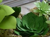 Come fare delle piante grasse carta