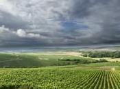 Vino Chardonnay: quando l'allegria passa Veneto Friuli