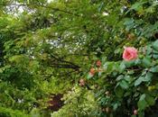 Rose antiche giardino Lina