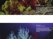 Fondali delle Isole Tremiti, borse studio tesi sperimentale biodiversità ambienti marini