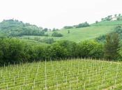 """weekend nelle Marche: borghi """"lezioni"""" gastronomia"""